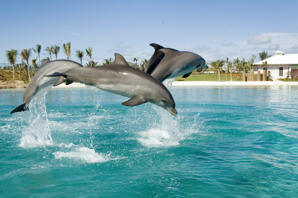 Dolphins at Atlantis